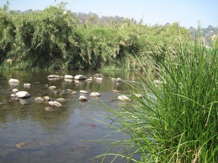The River at Taylor Yard